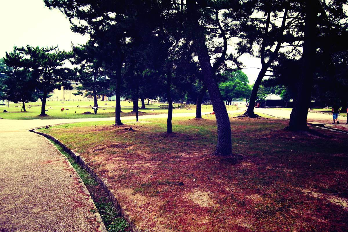 PhotoGallery | Nara